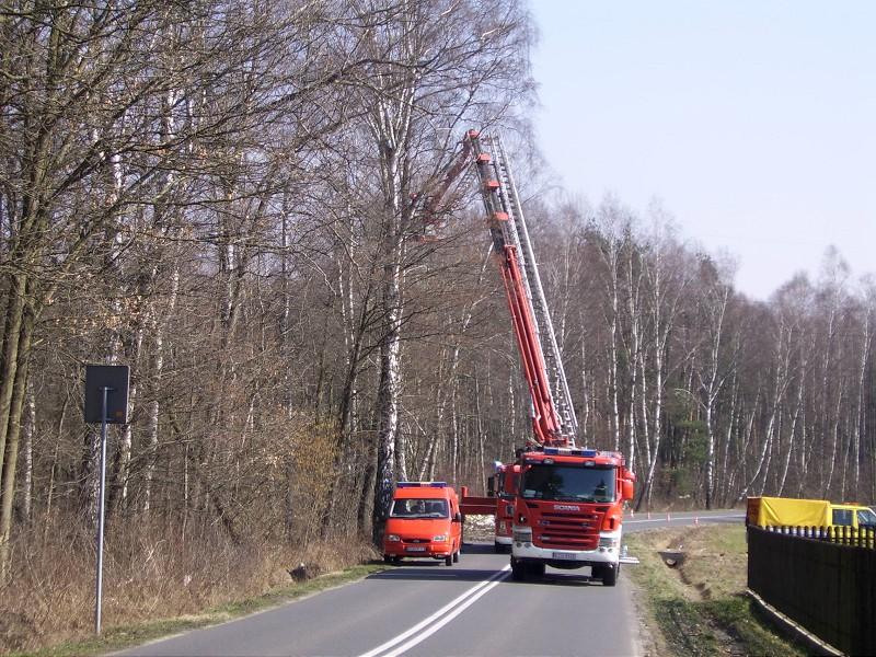 Wycinka drzew naul.Europejskiej wNieporazie
